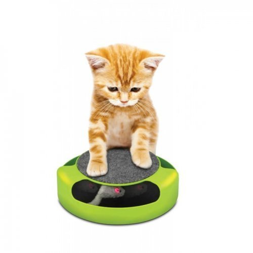 feline frenzy pet game