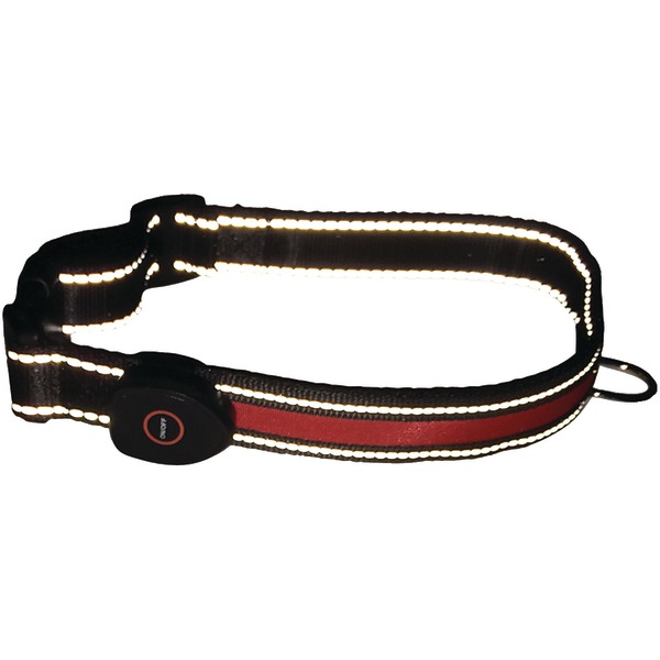 royal animals led dog collar (medium)